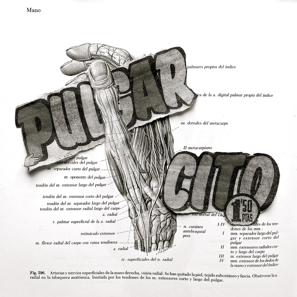 Anatomía recreativa. Pulgar - 2