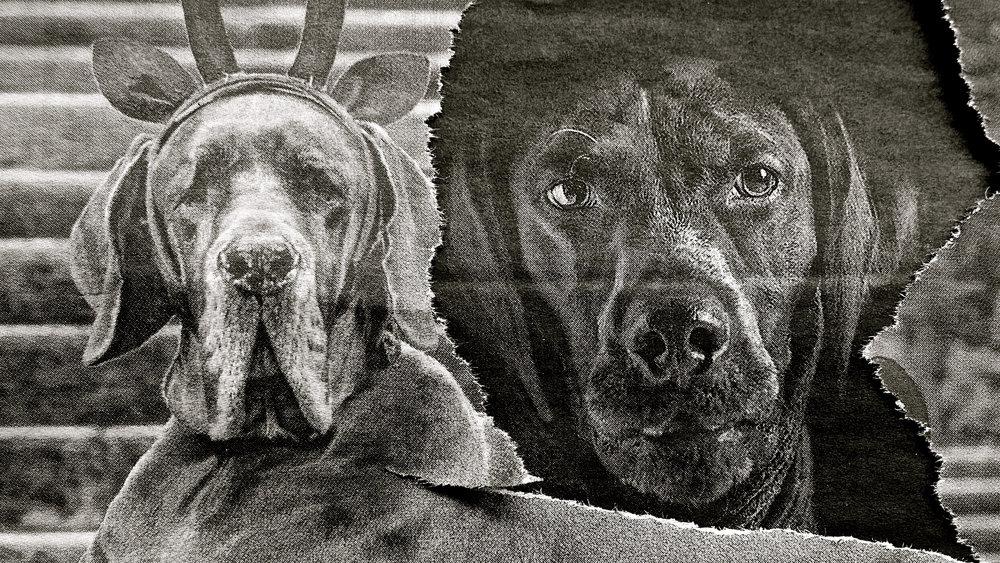 Collage Colectivo Ryp perros
