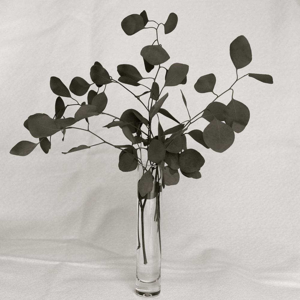 Florero eucalipto bn