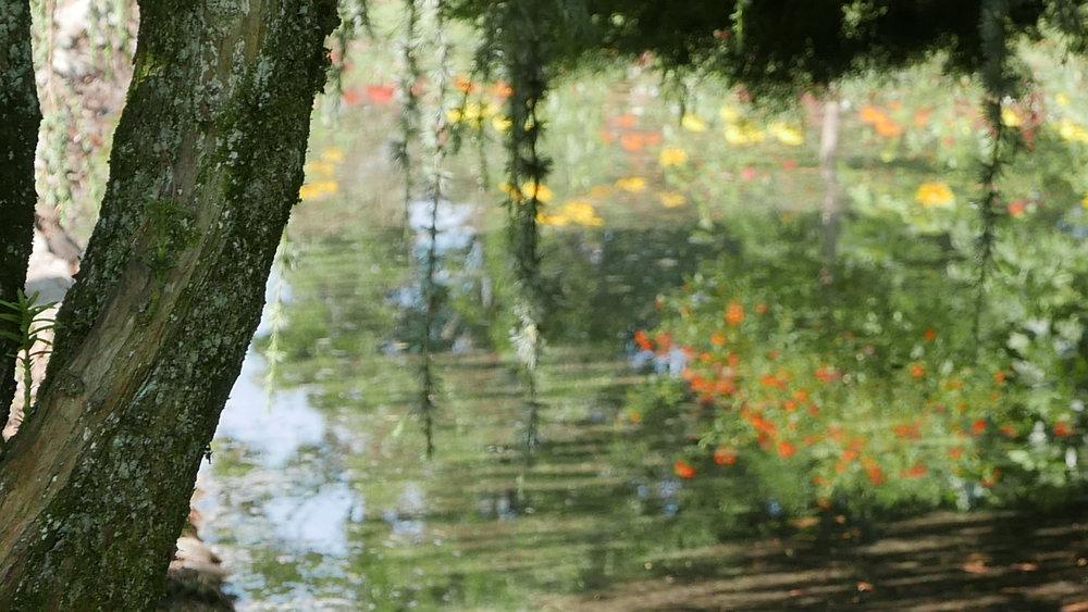 Reflejos flores agua