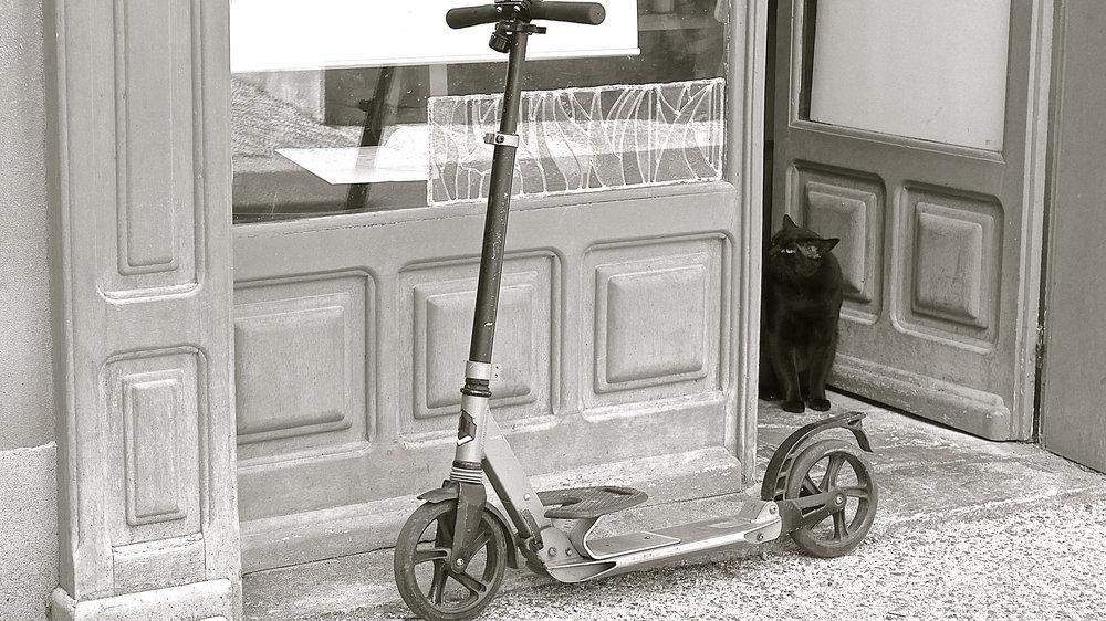 Patinete gato