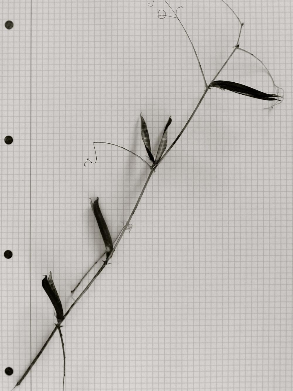 Ejercicios en papel cuadriculado - 1