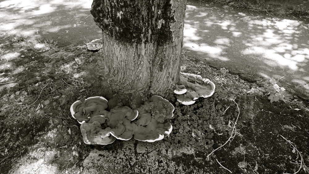Hongos árbol río Tarbes