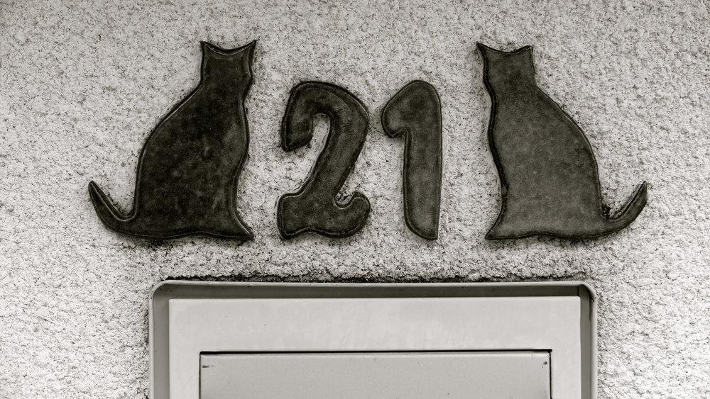 Gatos 21