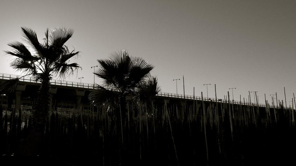 Palmeras y palmeras