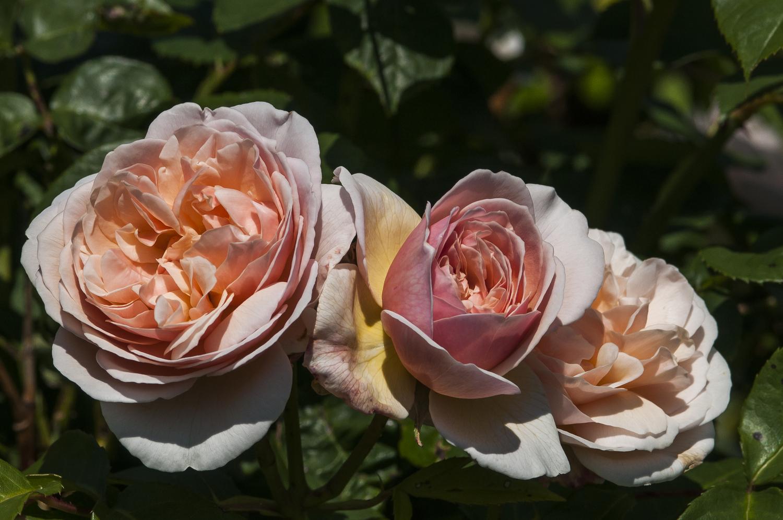 Sarah\'s Cutting Garden — Exclusive Dartmoor Wedding Venue & Devon ...