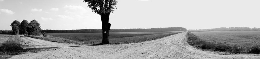 _panrm drzewo.jpg