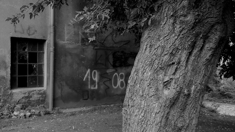 drzewo-1908.jpg