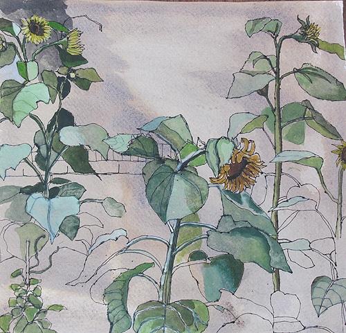 Sunflowers, Sophie Charalabous,2011,watercolour on Khadi paper40 x 40 cm, £295