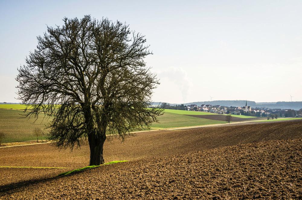 Birnbaum, Schwemmelsbach