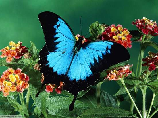 Insects-Butterfly-Photo-1120faf4.jpg