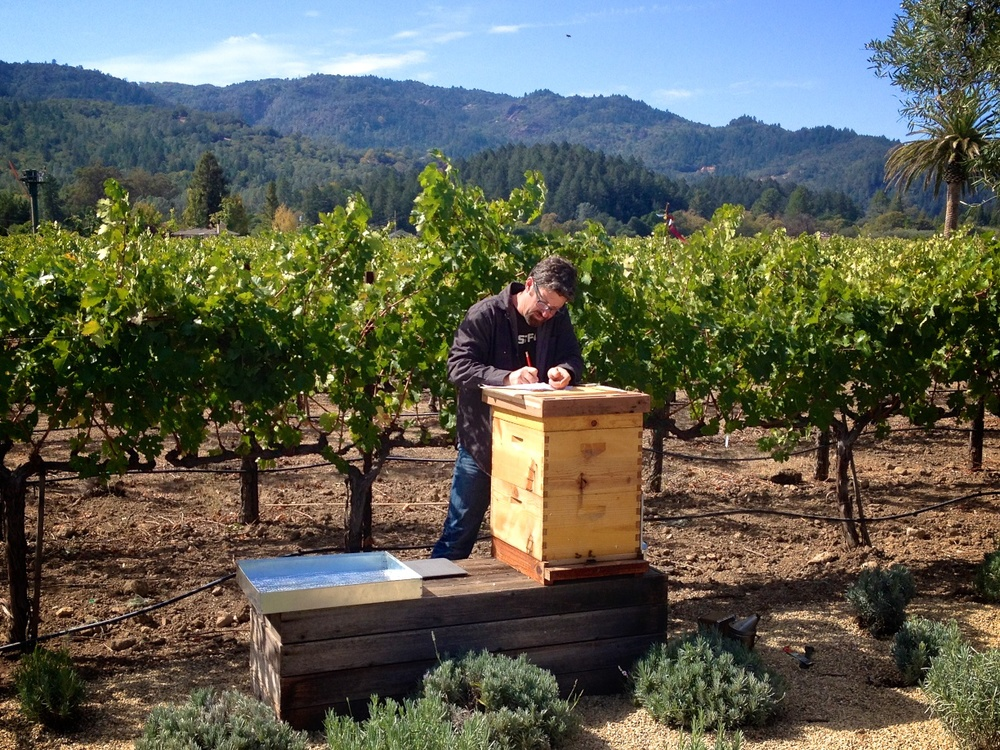 Rob at work in the vineyard.