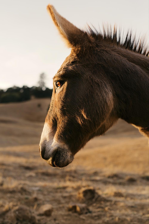 [www.emmakmorris.com]_c7a0_Donkey+1770.jpeg