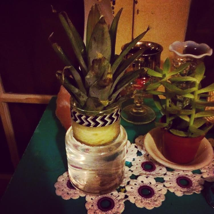 Here's my try at re-growing a pineapple!