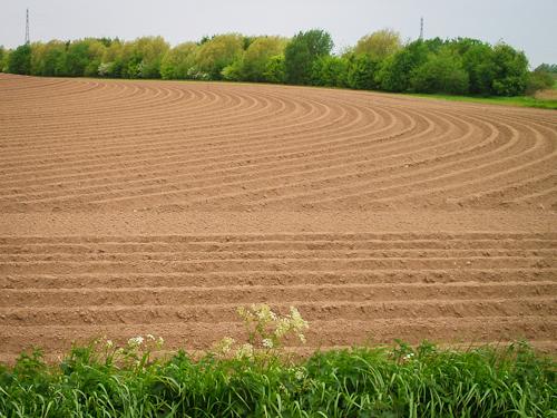 farm images-4.jpg