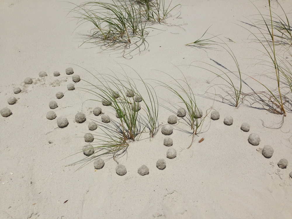 Sand balls on dune. Cape St. San Blas, FL. Summer 2013.