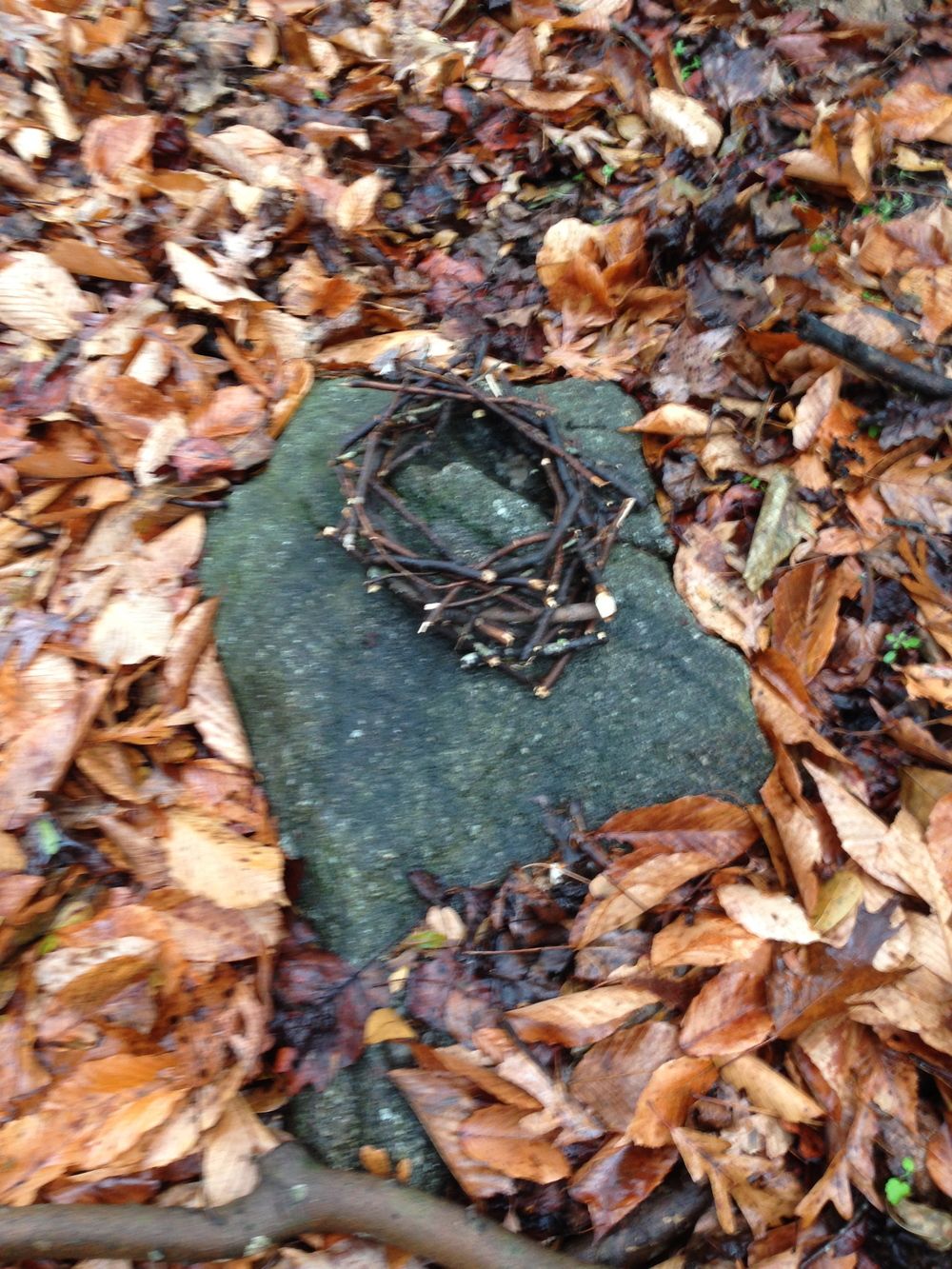 Nest on stone. Birchmore Trail. Athens, GA. Fall 2013.