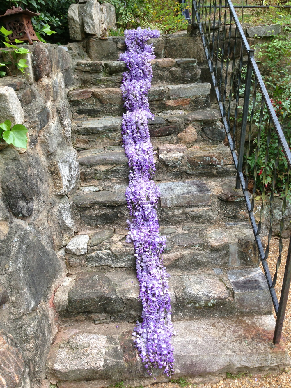 Wisteria flowers on stairs. Athens, GA. Spring 2013