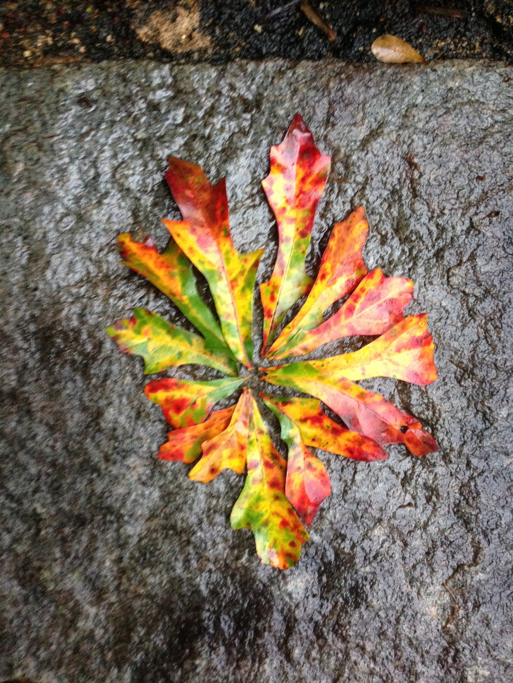 Leaves on Stone. Athens, GA. Fall 2013