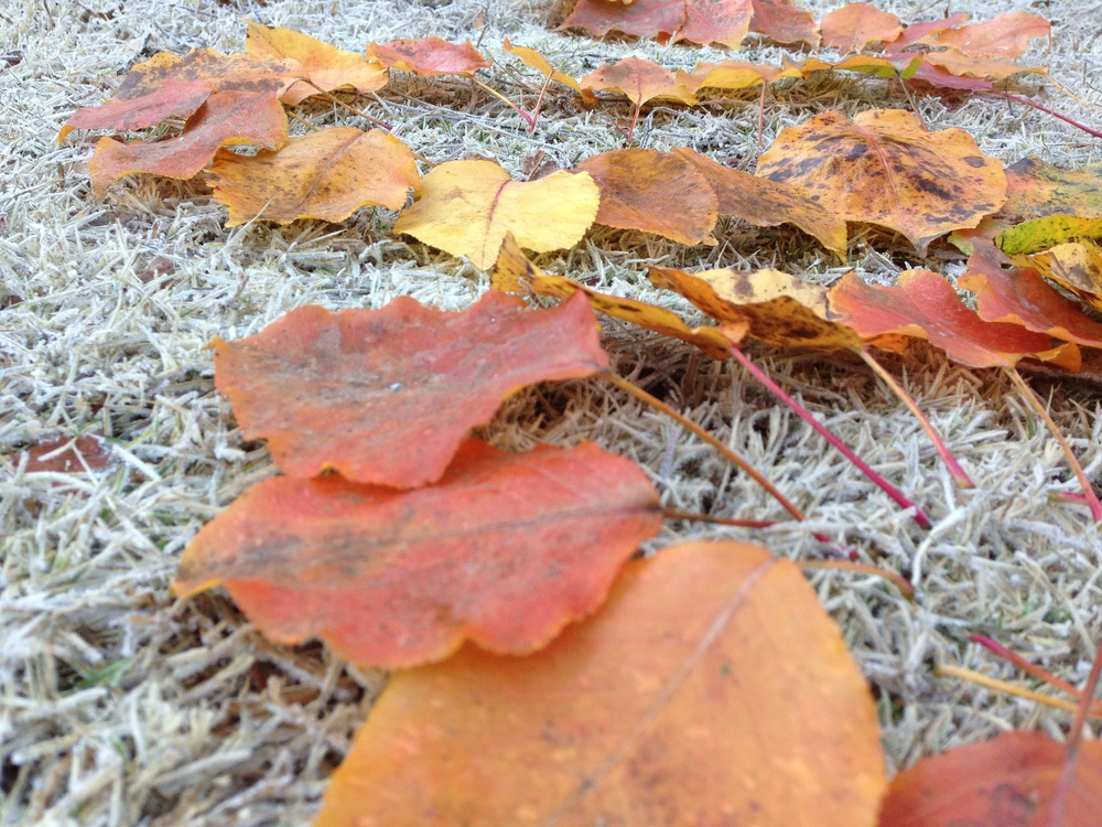 Leaves and frost. Lake Herrick Ropes Course. University of Georgia. Athens. GA. Fall 2013.