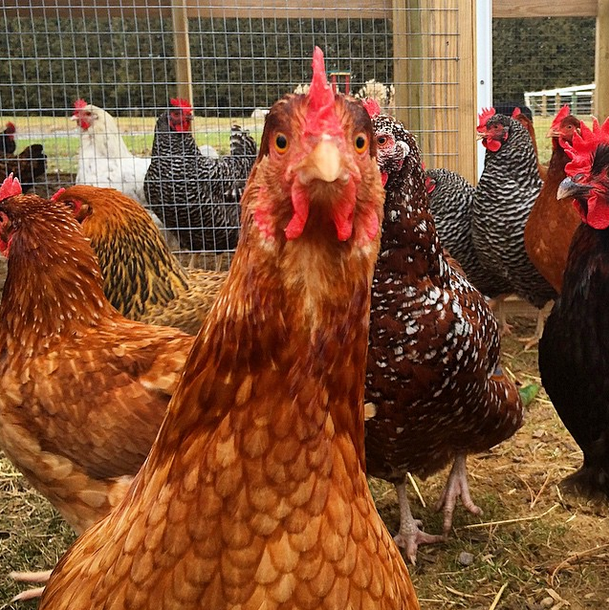 Organic, free-range, crazy eggs served daily