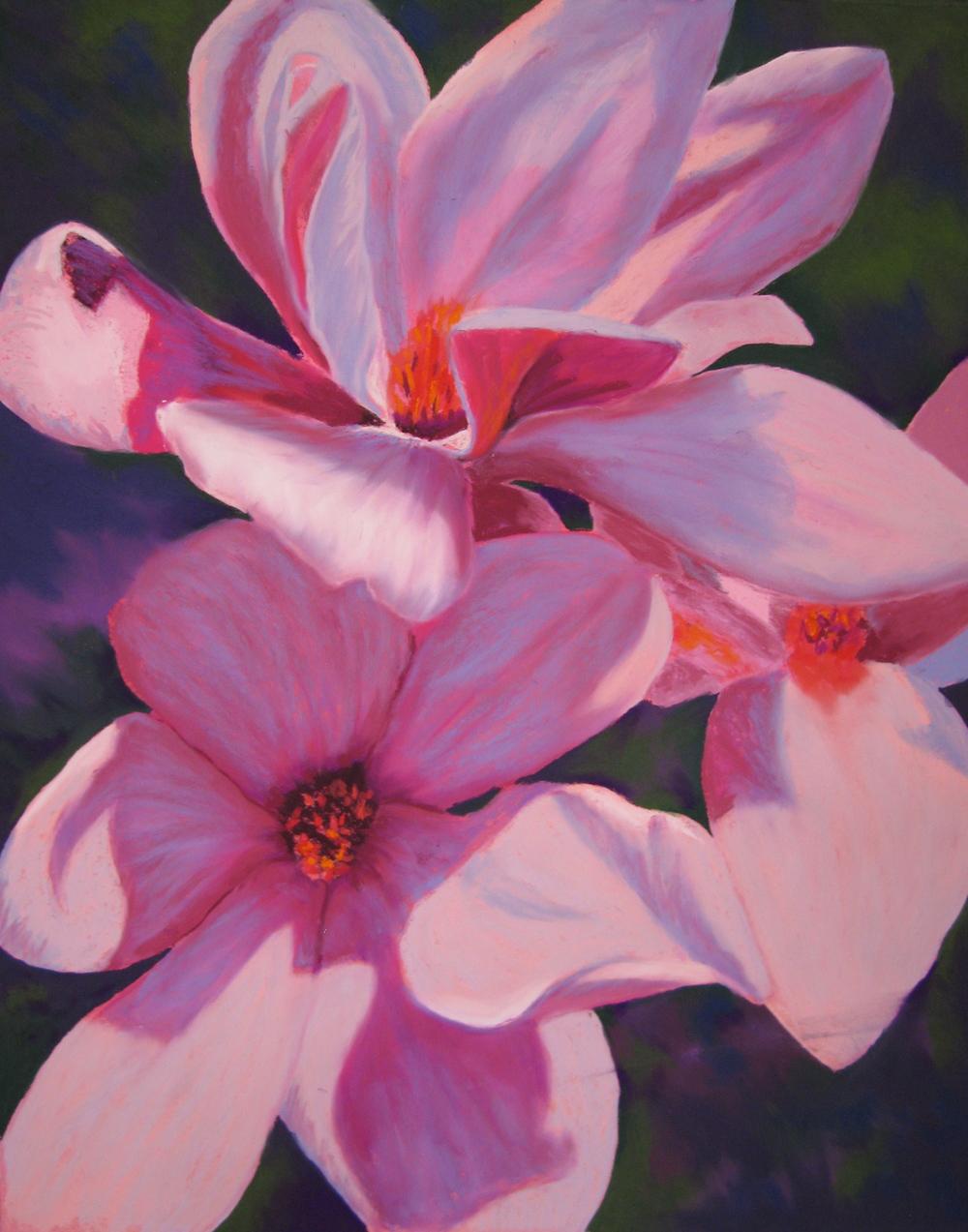 Hobbiy's Magnolia.JPG