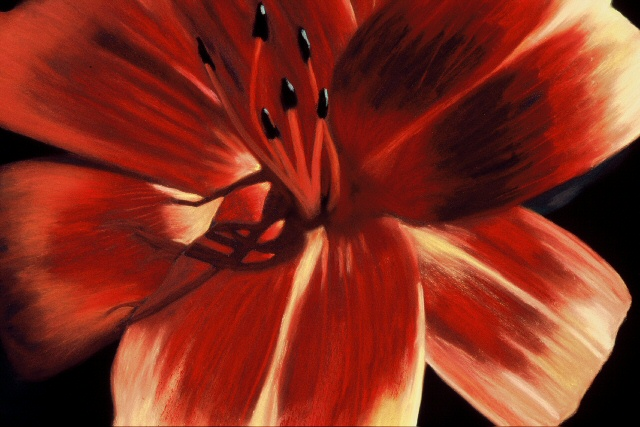 Orange Lily.jpg