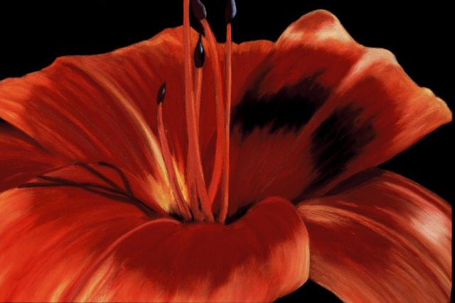 Orange Lily #2.jpg