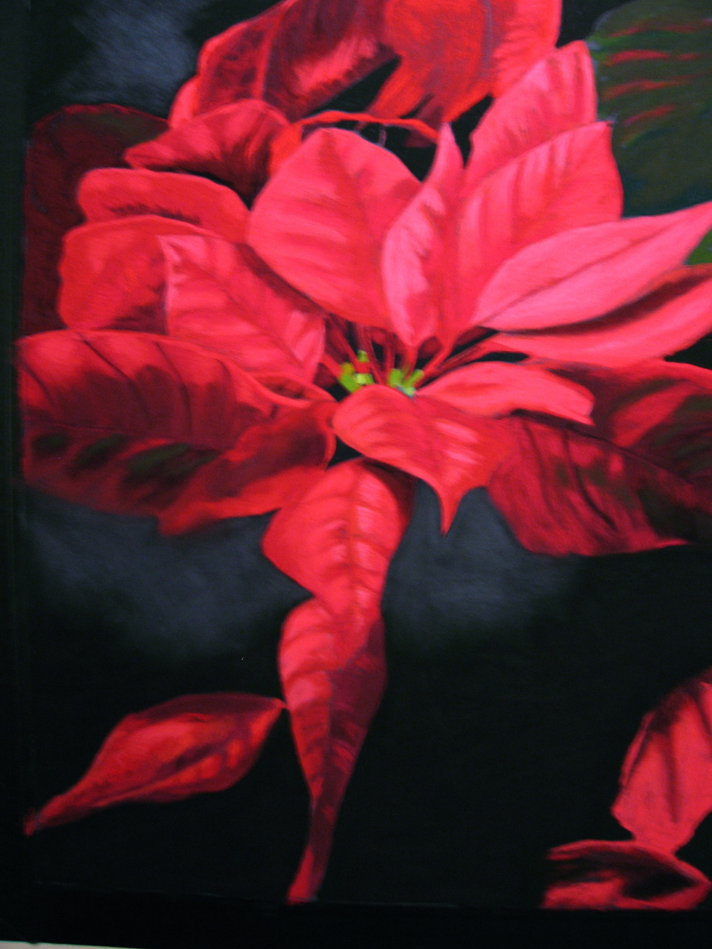 Poinsettia #6.JPG