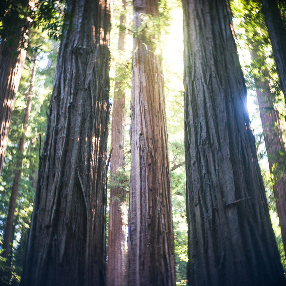 john_mireles_redwoods (1 of 7).jpg