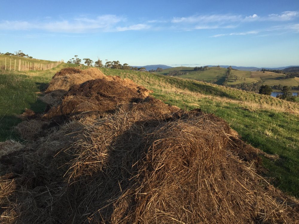 The finished pile from 2016! Approximately 26m x 3m x 1+m - that's a lot of poo and hay!