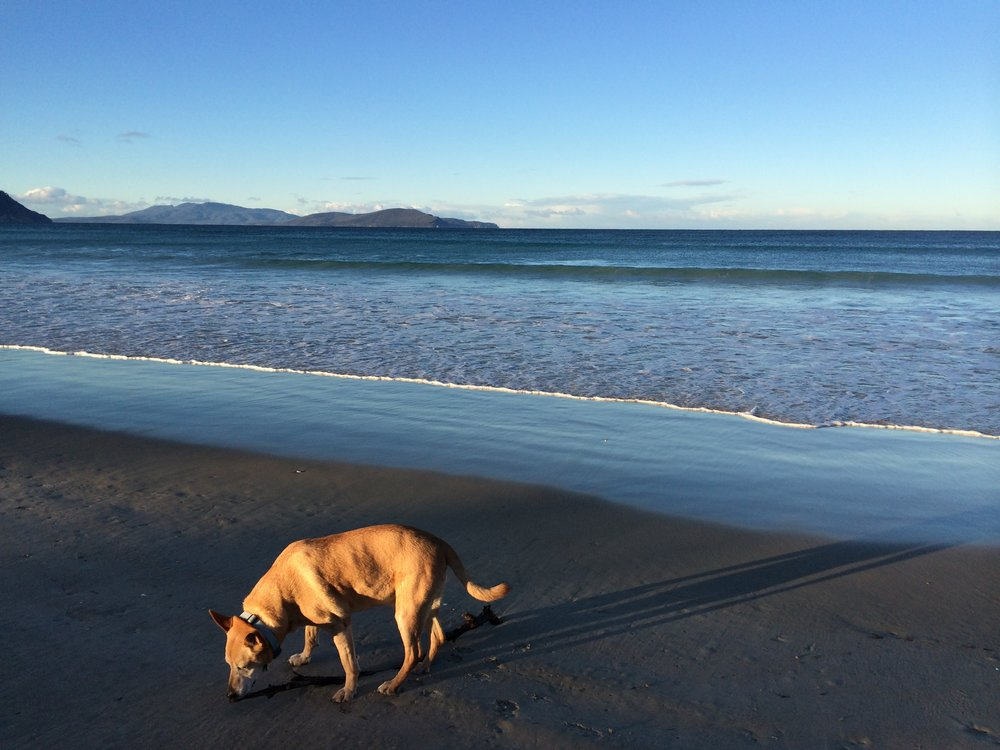 Enjoying our local, Marion Bay Beach.