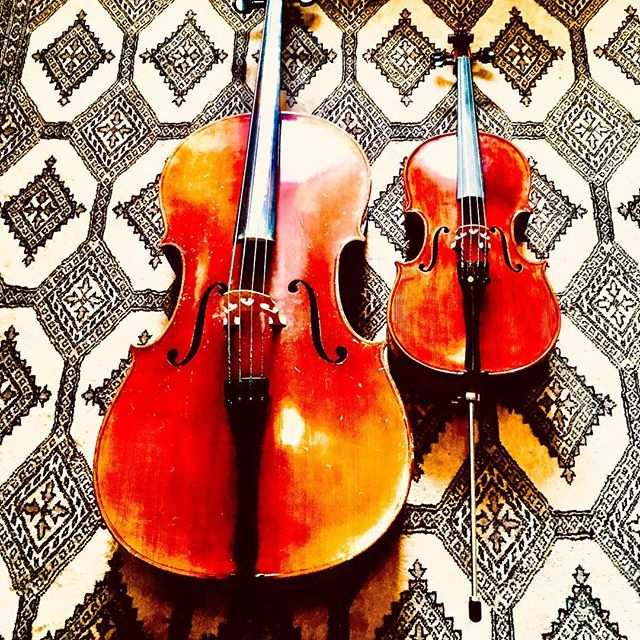 A new student came with a ONE TENTH cello - like a thickish viola, with spike.  Can't get over how cute it is.
