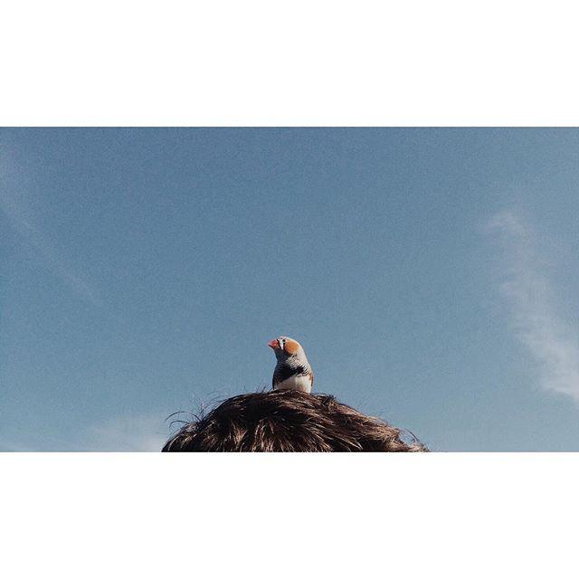 Rooftop BBQ special guest. #NYC #brooklyn #bushwick #shampoo