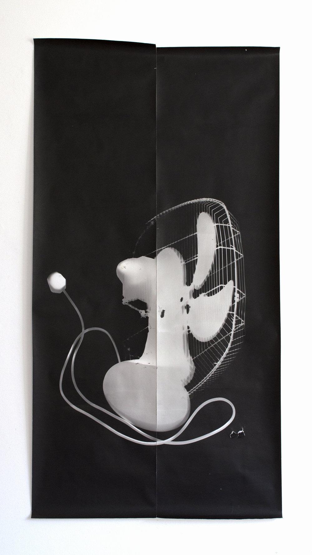 Photogram 69.2cm x 134cm