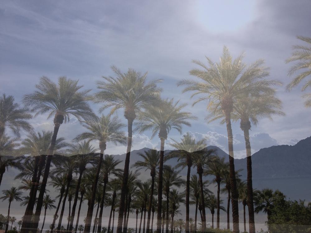 palmtreesandmountains