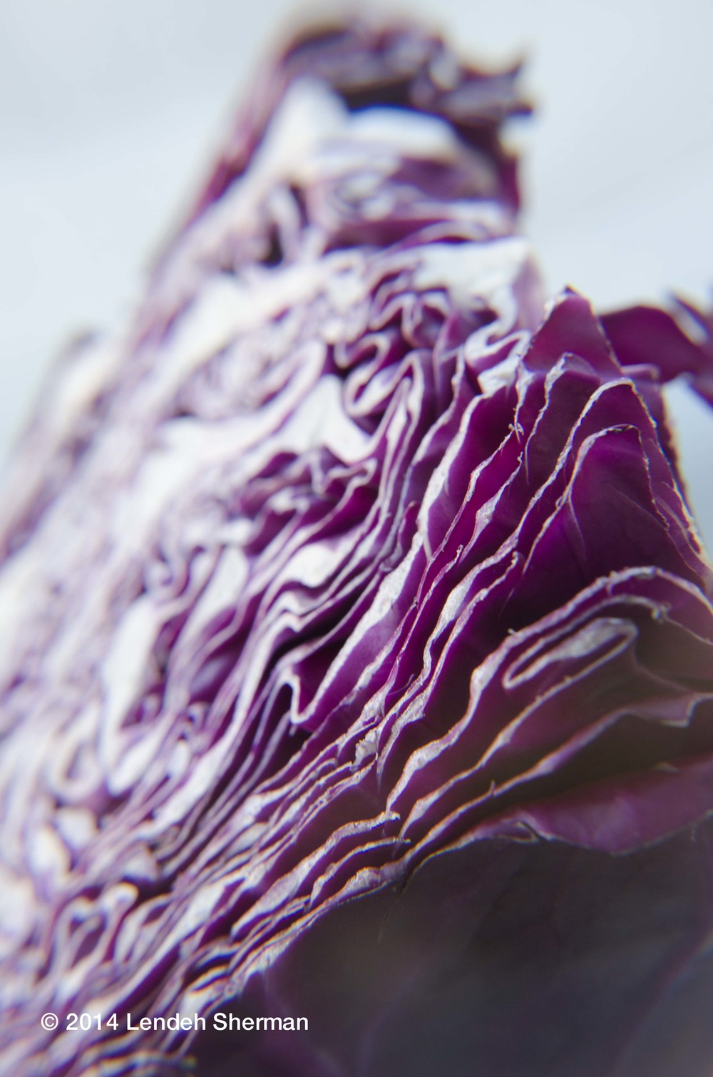 Photos of the day: Red cabbage.
