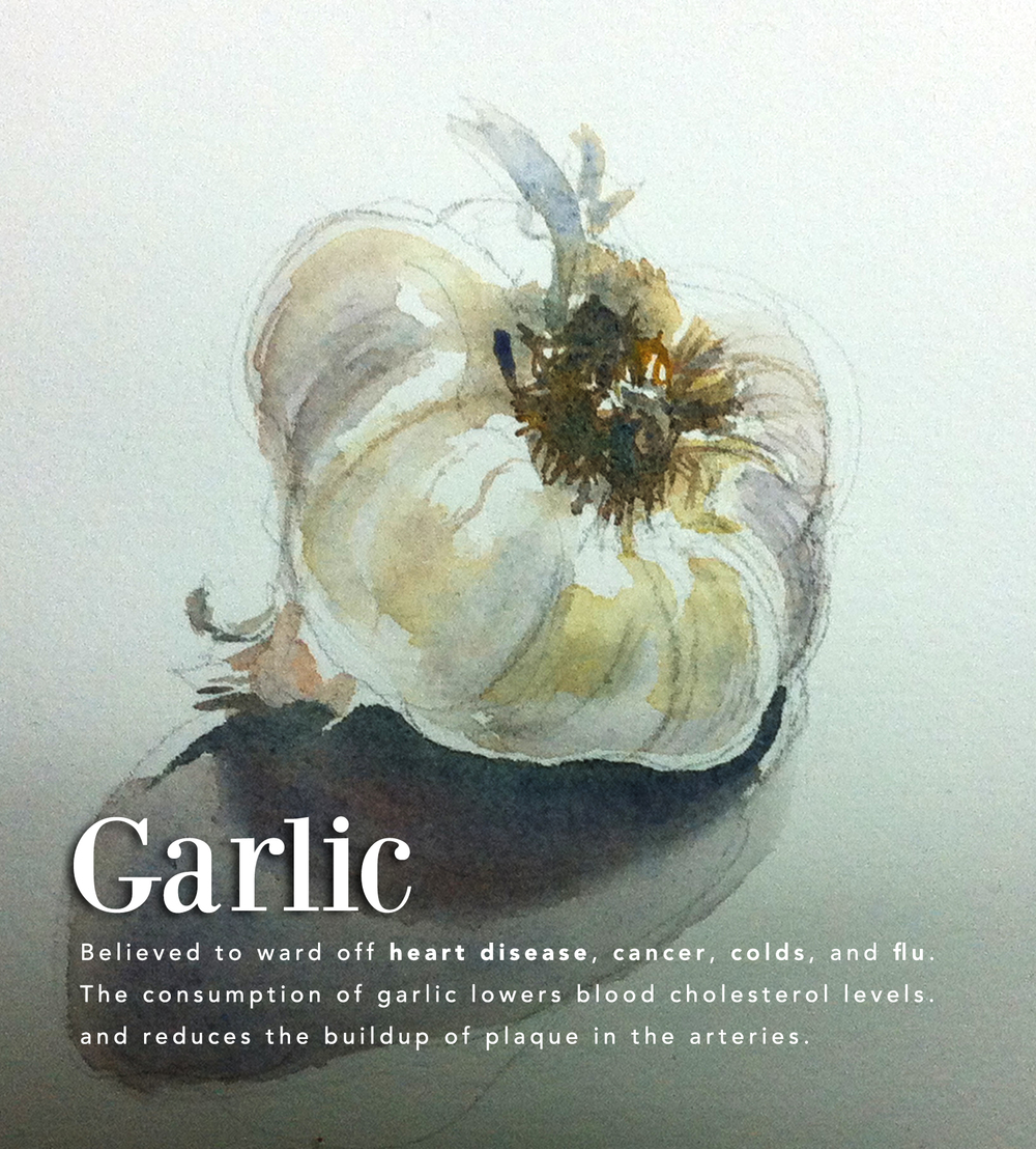 Garlic can be challenge to paint with watercolor especially on a white background. One must take care to render the delicate membrane and not make the form feel too heavy.