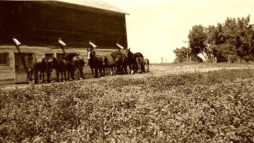 Granary in 1911