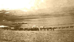 bozeman_trail_wagons2.jpg