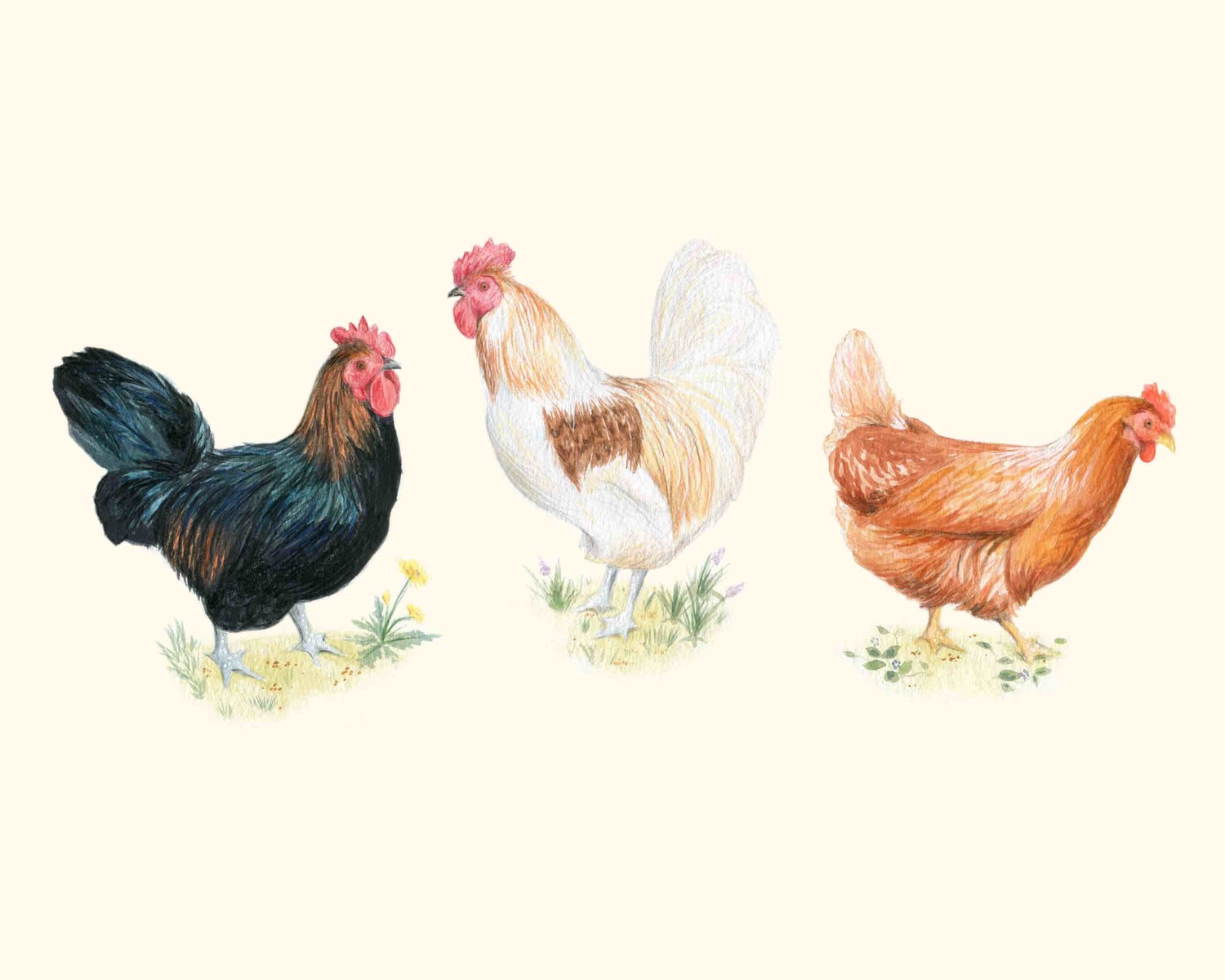 chickens for lucky peach u2014 kendyll hillegas