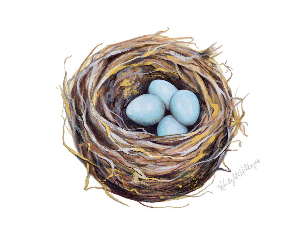 Bird's Nest Illustration