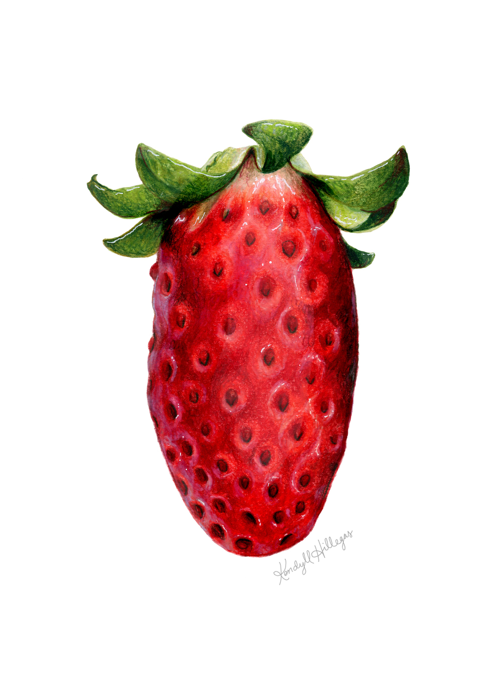Alpine Strawberry Illustration