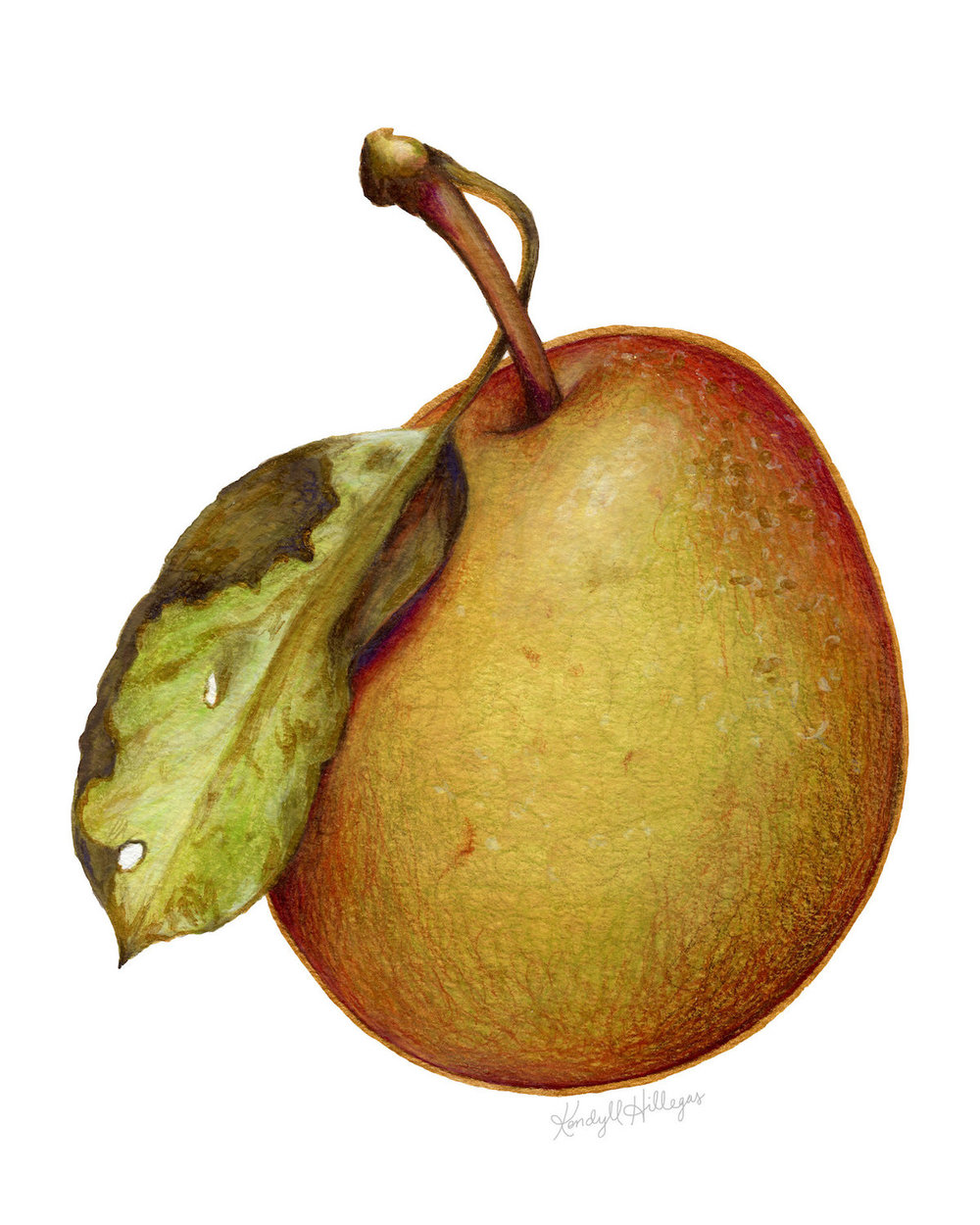 Pear with Leaf.jpg