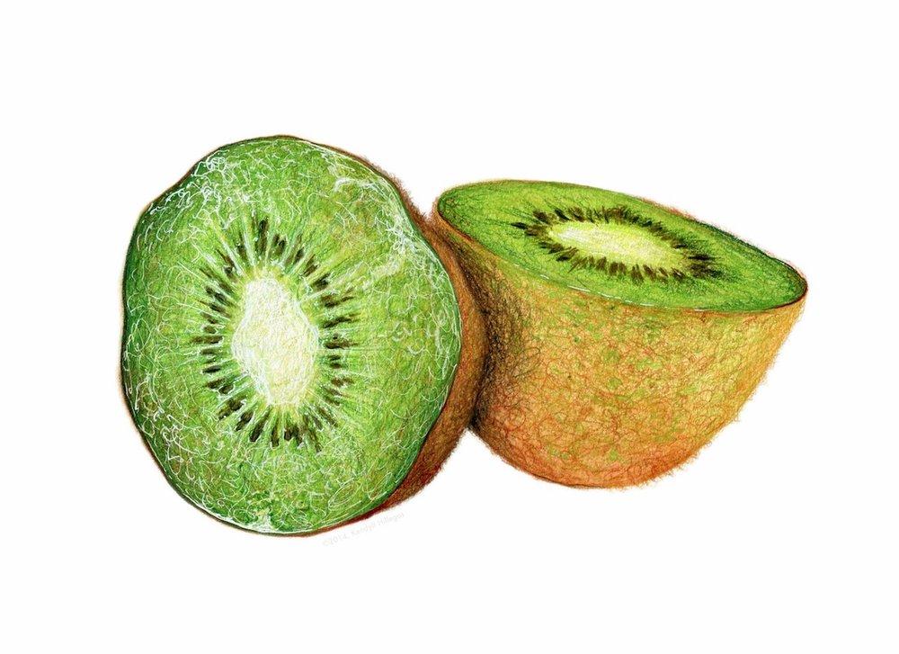 Kiwi Illustration