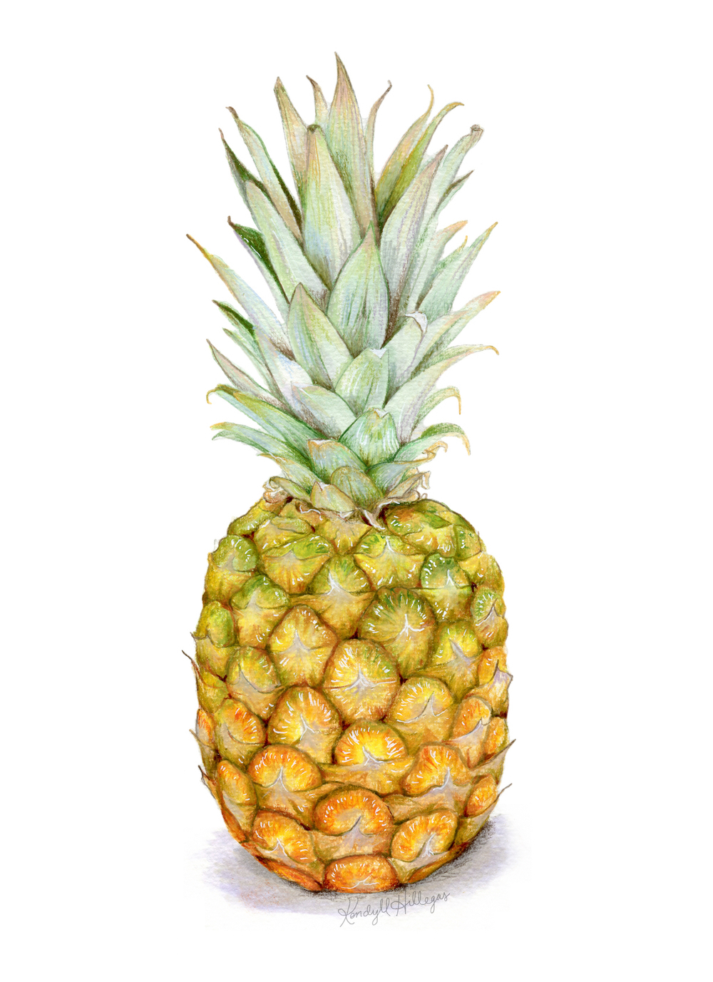 Pineapple Illustration