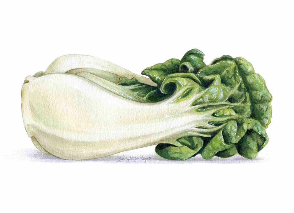 Bok Choy Illustration