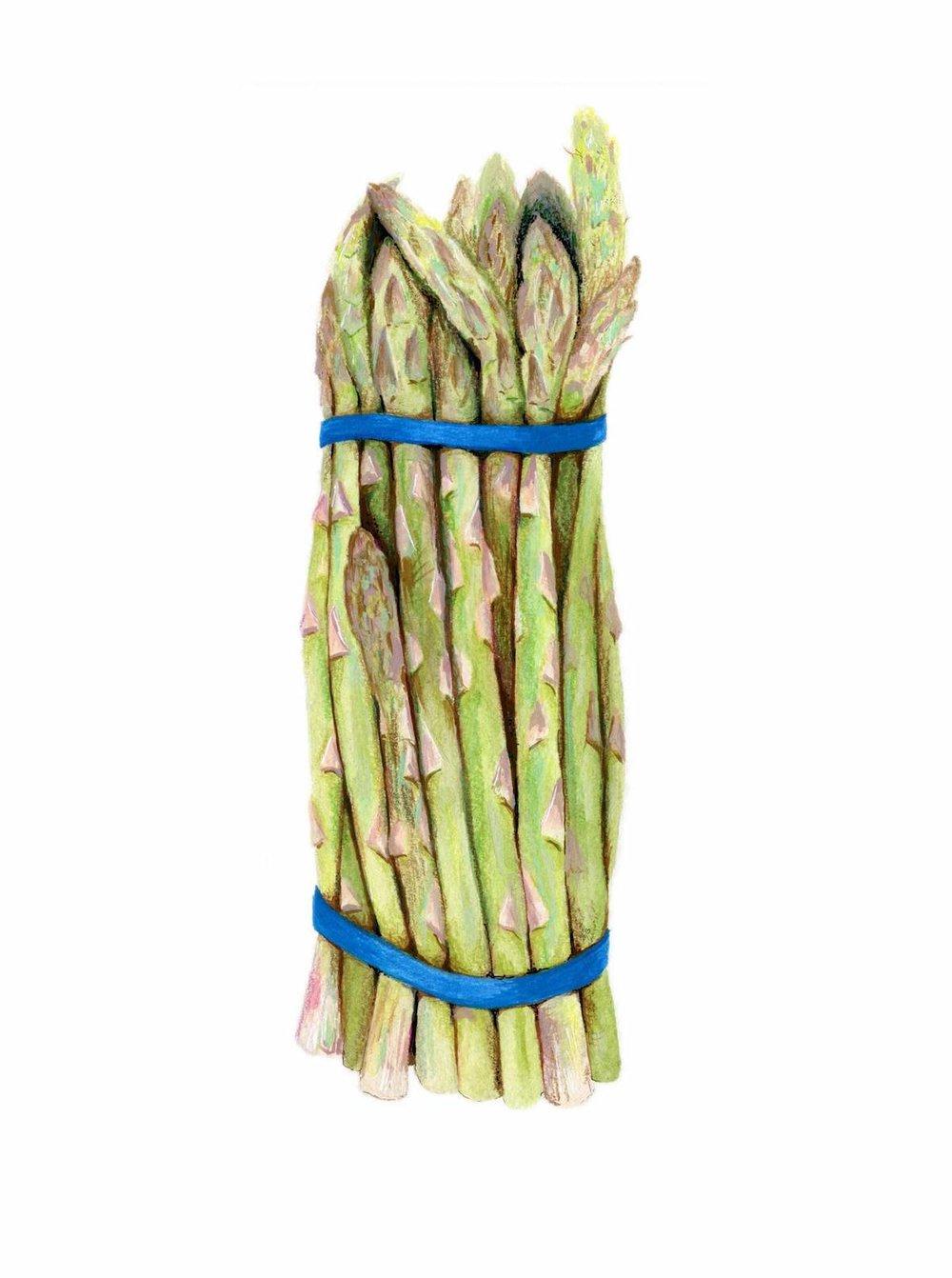 Asparagus Illustration