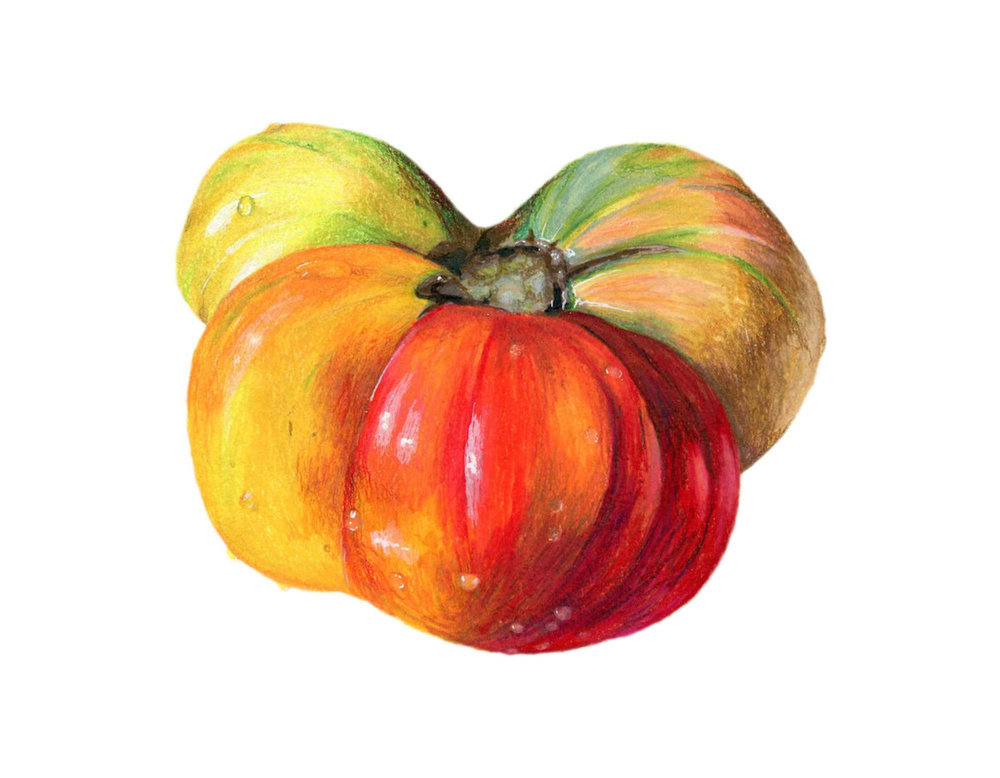 Heirloom Tomato Illustration