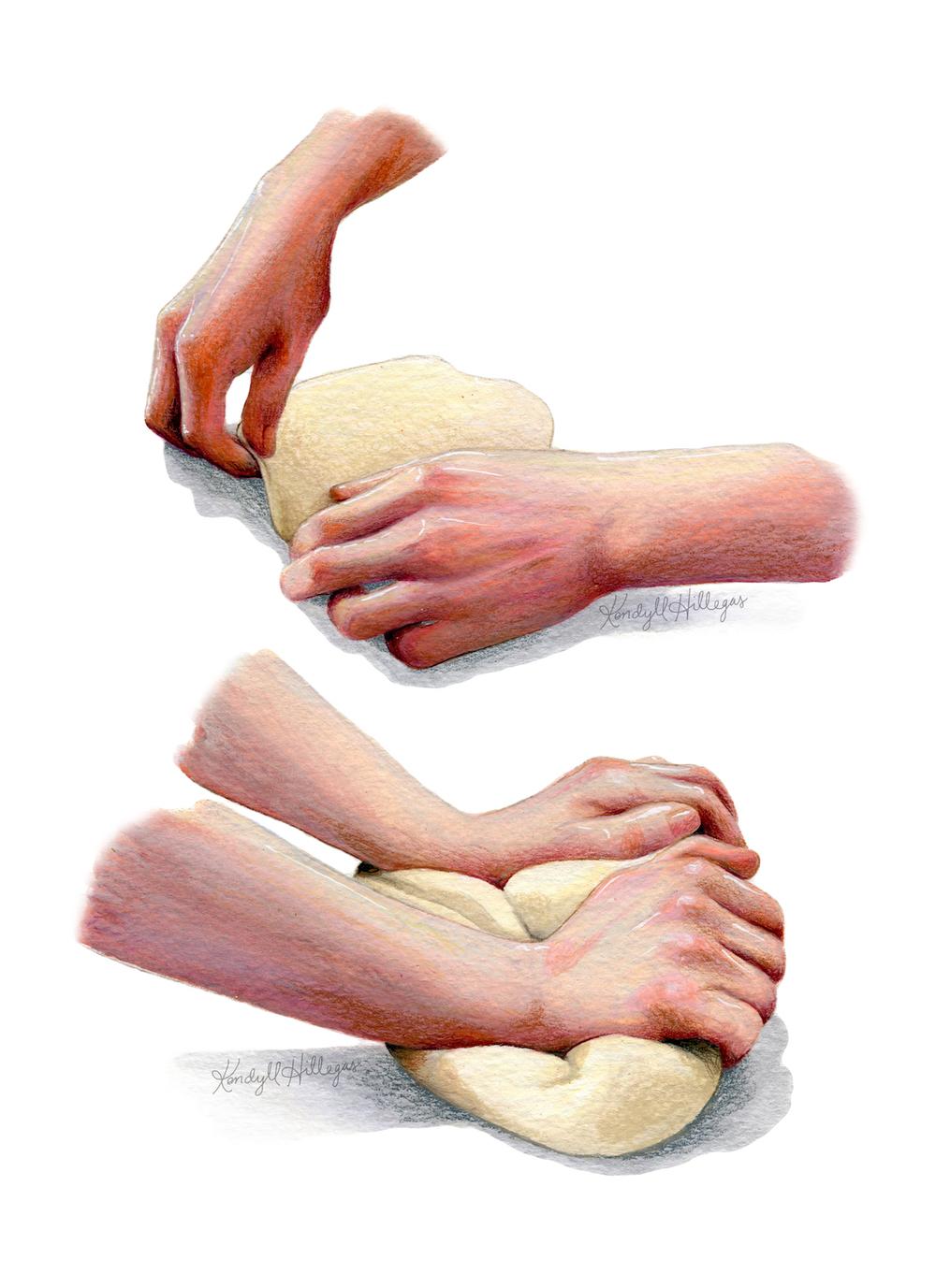 Hands Kneading Illustration
